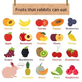 Frutas que los conejos pueden comer. ilustración de vector de comida