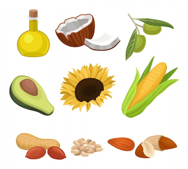 Fuente de conjunto de aceite comestible, coco, aguacate, girasol, mazorca de maíz, maní, almendras, sésamo, aceituna ilustraciones sobre un fondo blanco
