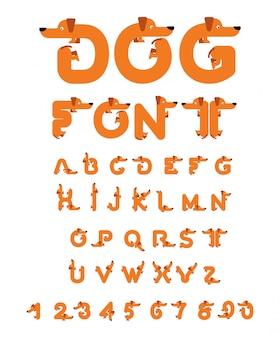 Fuente de perro. alfabeto dachshund letras de animales de origen. mascota abc