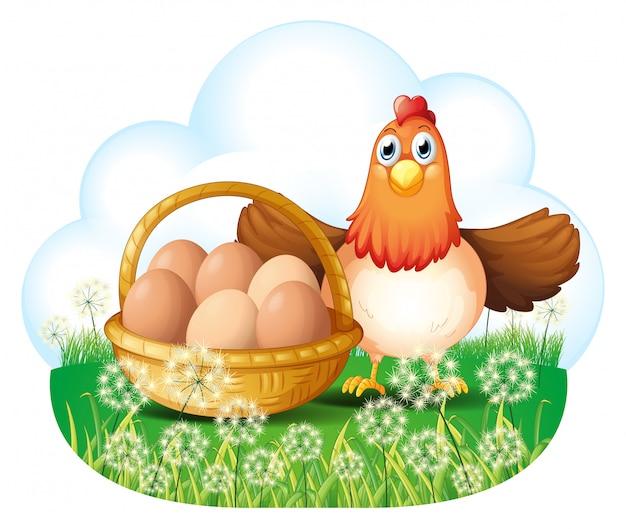 Una gallina con huevos en una canasta
