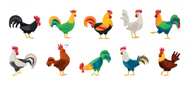 Gallo de animal de dibujos animados aislado establece icono.