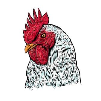 Gallo dibujado a mano.