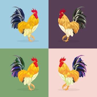 Gallo, gallo. animales de granja, pájaros