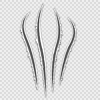 Garras negras rasguño animal raspar la pista gato tigre rasguños forma de la pata pata de la bestia ilustración del vector
