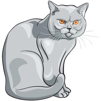 Gato azul británico con ojos naranjas se sienta y mira seriamente