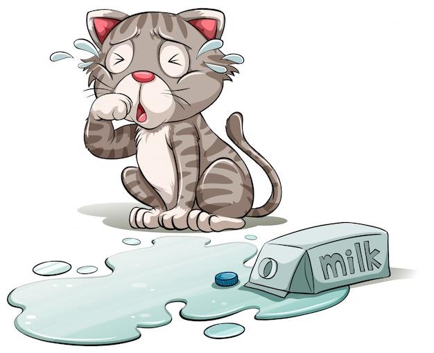 Un gato llorando