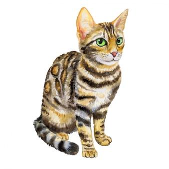 Gato de raza bengala en acuarela
