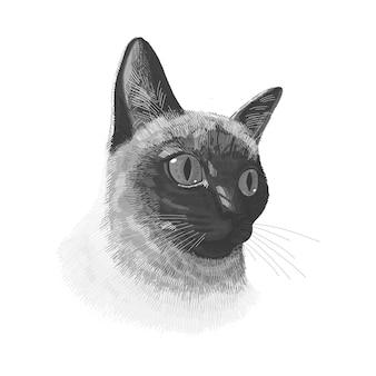 Gato siamés animal lindo en blanco y negro