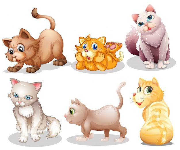 Gatos juguetones