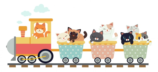 Gatos lindos en un tren