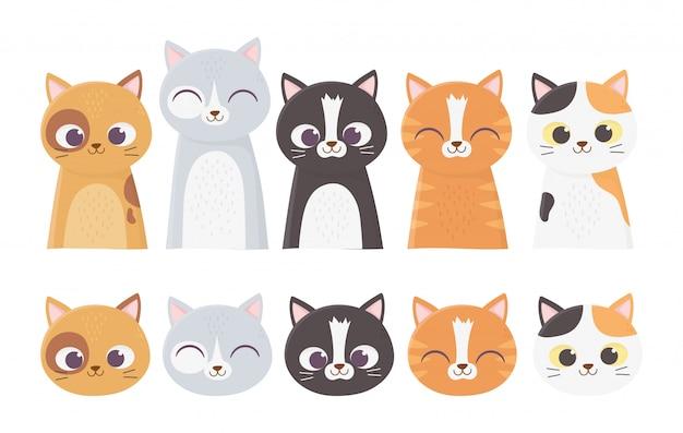 Gatos mascotas se enfrenta a diferentes dibujos animados de raza felina ilustración