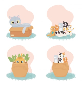 Los gatos me hacen feliz, los gatos en la caja de la cesta en la alfombra de dibujos animados