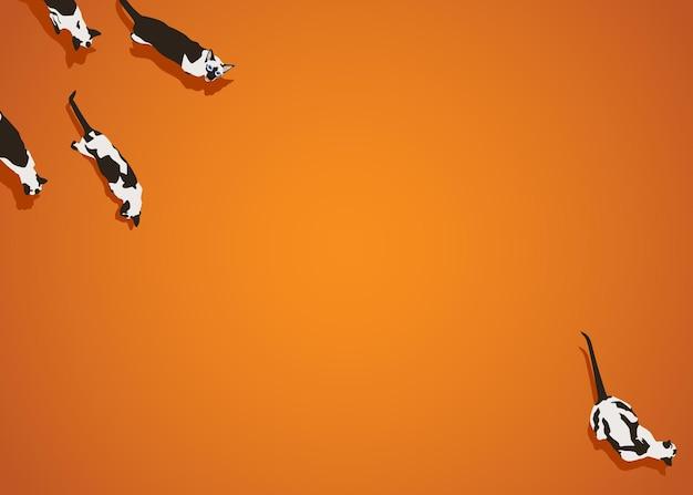 Gatos siameses sobre fondo degradado naranja
