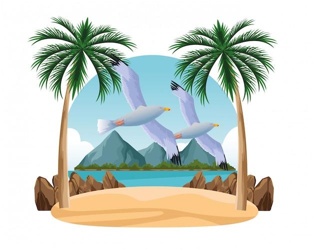 Gaviotas pájaros volando dibujos animados