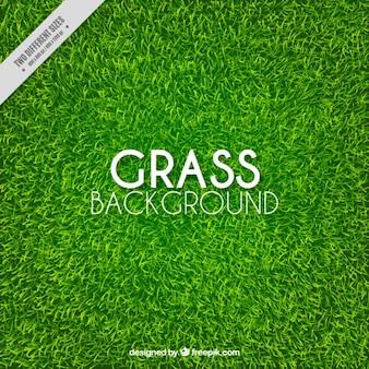 Genial fondo de hierba realista