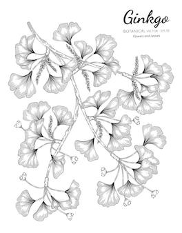 Ginkgo dibujado a mano ilustración botánica con arte lineal sobre fondos blancos.