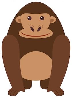 Gorila feliz sobre fondo blanco