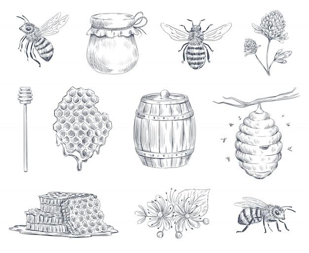 Grabado de abejas. miel de abejas, granja de apicultura y miel melosa vintage dibujado a mano ilustración conjunto