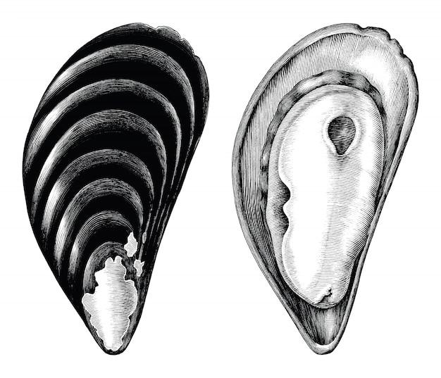 Grabado antiguo ilustración de mejillones clip art blanco y negro aislado sobre fondo blanco.