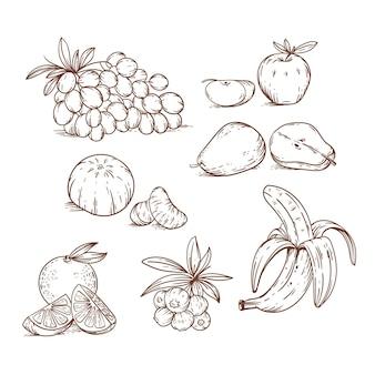 Grabado conjunto de frutas dibujadas a mano