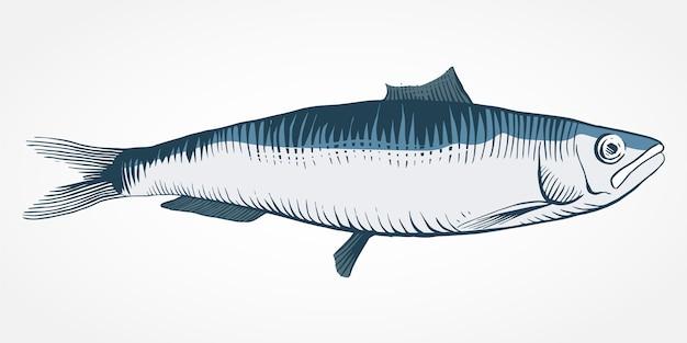 Grabado dibujado a mano ilustración sardina