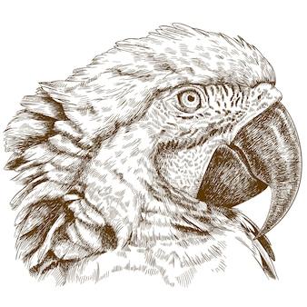 Grabado de dibujo de cabeza de guacamayo