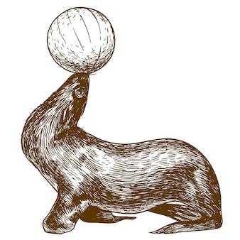 Grabado, dibujo, ilustración, de, circo, león marino