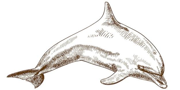 Grabado dibujo ilustración de delfines saltando