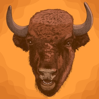 Grabado ilustración antigua de cabeza de bisonte