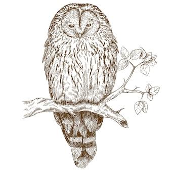 Grabado de la ilustración de búho