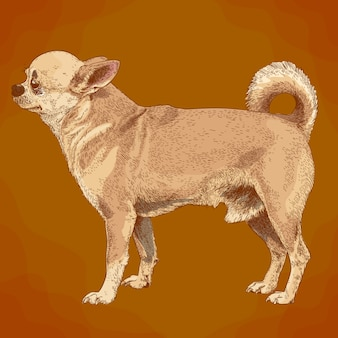 Grabado de la ilustración del perro chihuahua