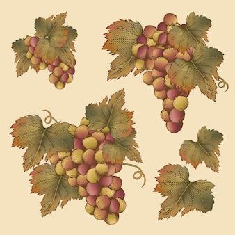 Grabado de uva y hojas, conjunto de elementos de frutas vintage