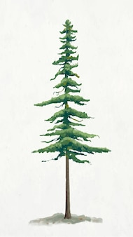 Gráfico de elemento de árbol de pino sobre fondo liso