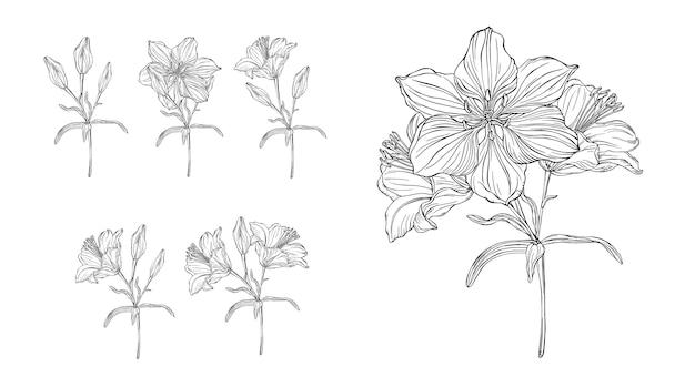 Gráficos vectoriales de una composición floral con flores lirios.