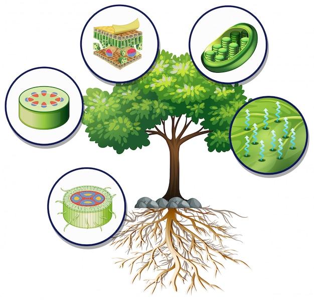 Gran árbol verde y células vegetales cercanas