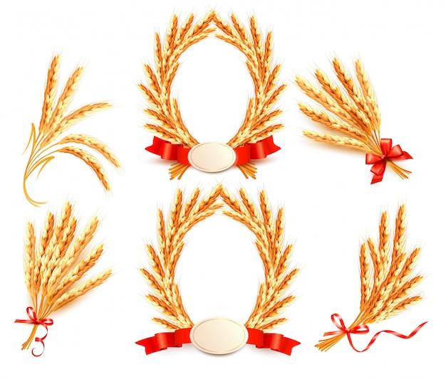Gran colección con espigas de trigo. ilustración.