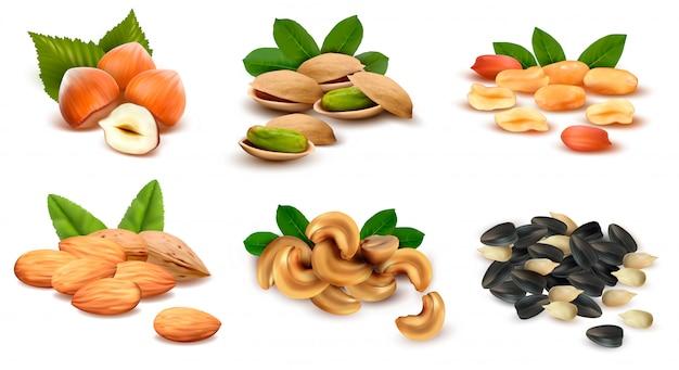 Gran colección de nueces y semillas maduras.