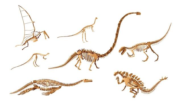 Gran conjunto de esqueletos de dinosaurios. exposición de arqueología ilustración vectorial