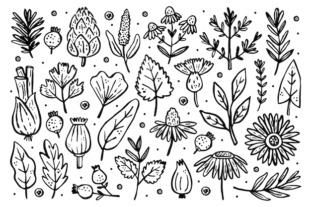 Gran conjunto de hierbas. plantas forestales. flor, rama, hoja, lúpulo, cono. elementos naturales.