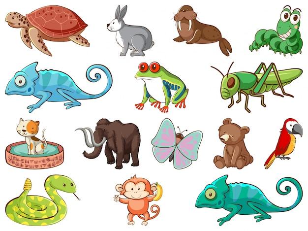 Gran conjunto de vida silvestre con muchos tipos de animales.