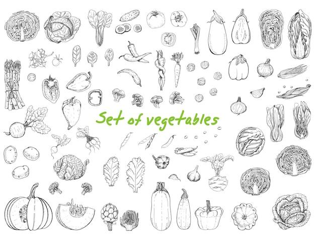Gran set con verduras en estilo boceto.