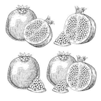 Granada fruta dibujada a mano