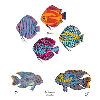 Grandes peces de acuario en estilo de dibujo colorido en blanco