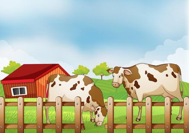 Una granja con dos vacas dentro de la cerca.