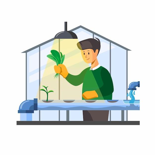 Granja hidropónica. hombre cosechando vegetales orgánicos del concepto de casa verde hidrofónica en la ilustración de dibujos animados