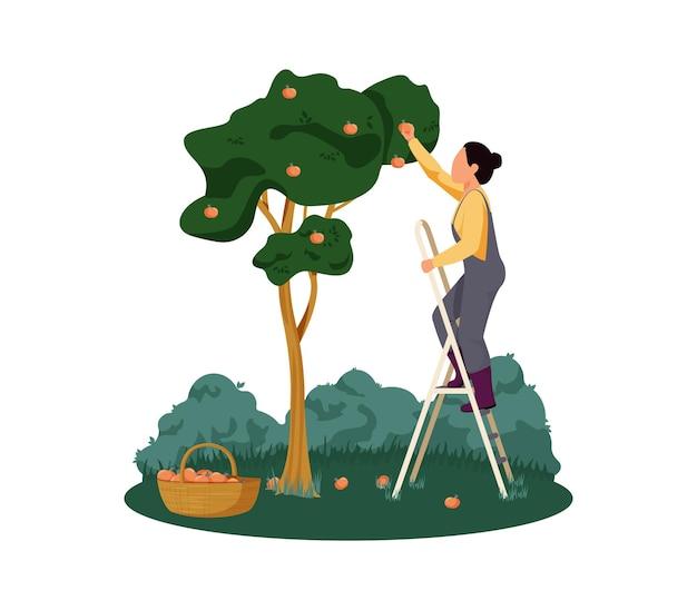 Granja orgánica con mujer recogiendo manzanas ilustración plana