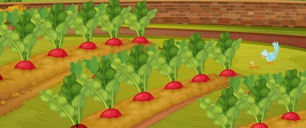 Granja de zanahorias con escena de naturaleza de pajarito