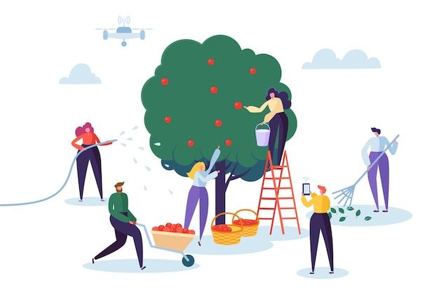 Granjero recoge la cosecha de manzanas en la cesta.