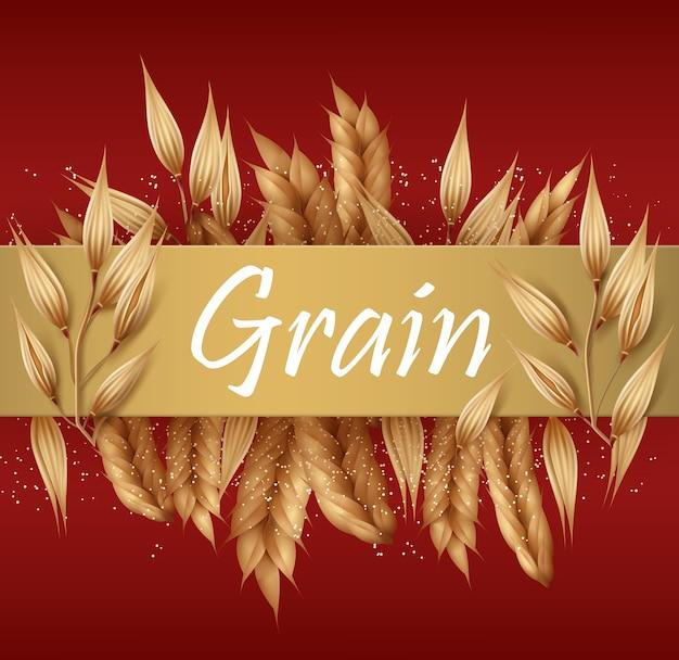 Granos de cereales y espiguillas o espigas de trigo, cebada, avena y centeno con banner dorado para texto aislado sobre fondo rojo.