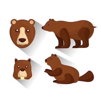Grizzly bear and castver animals wildlife vector illustration